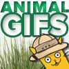 Animal Gifs